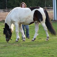 National Chincoteague Pony Association logo