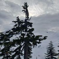 Mt Baker Ski Area logo
