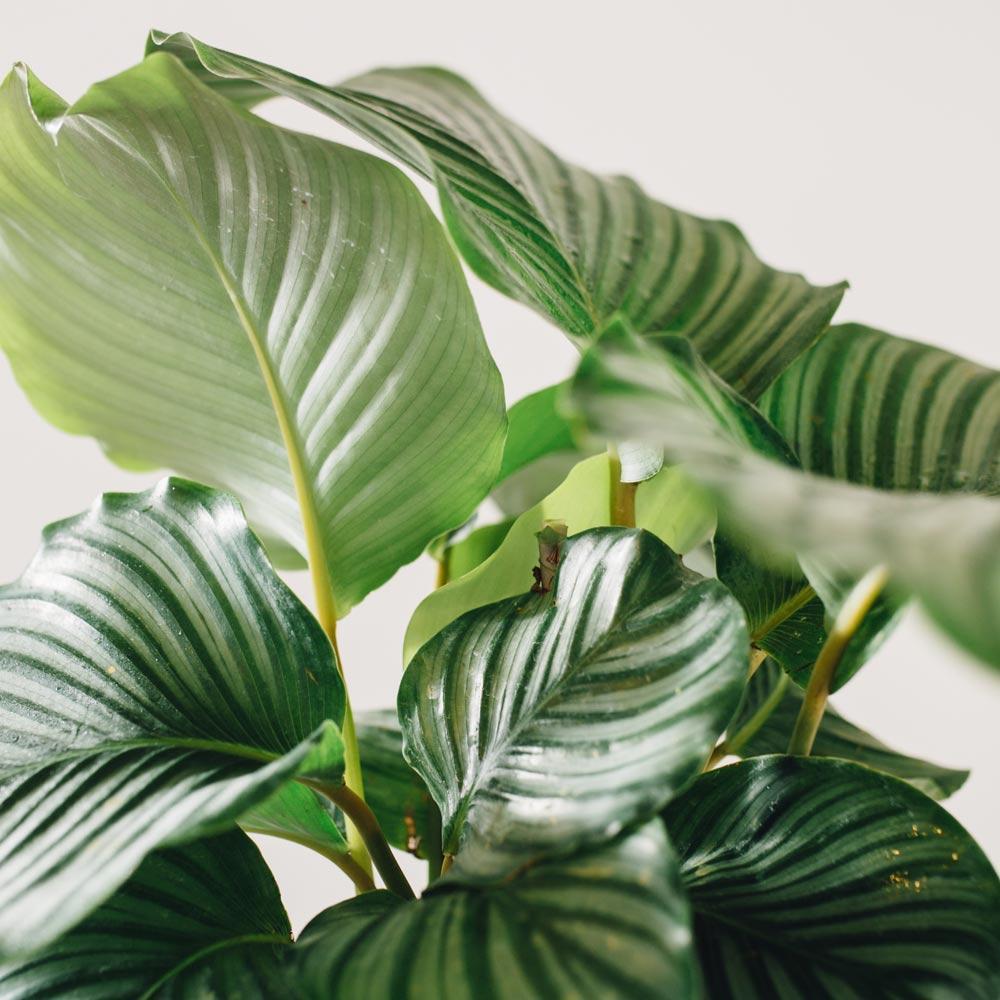 Babygreens Plant Shop & Cafe logo