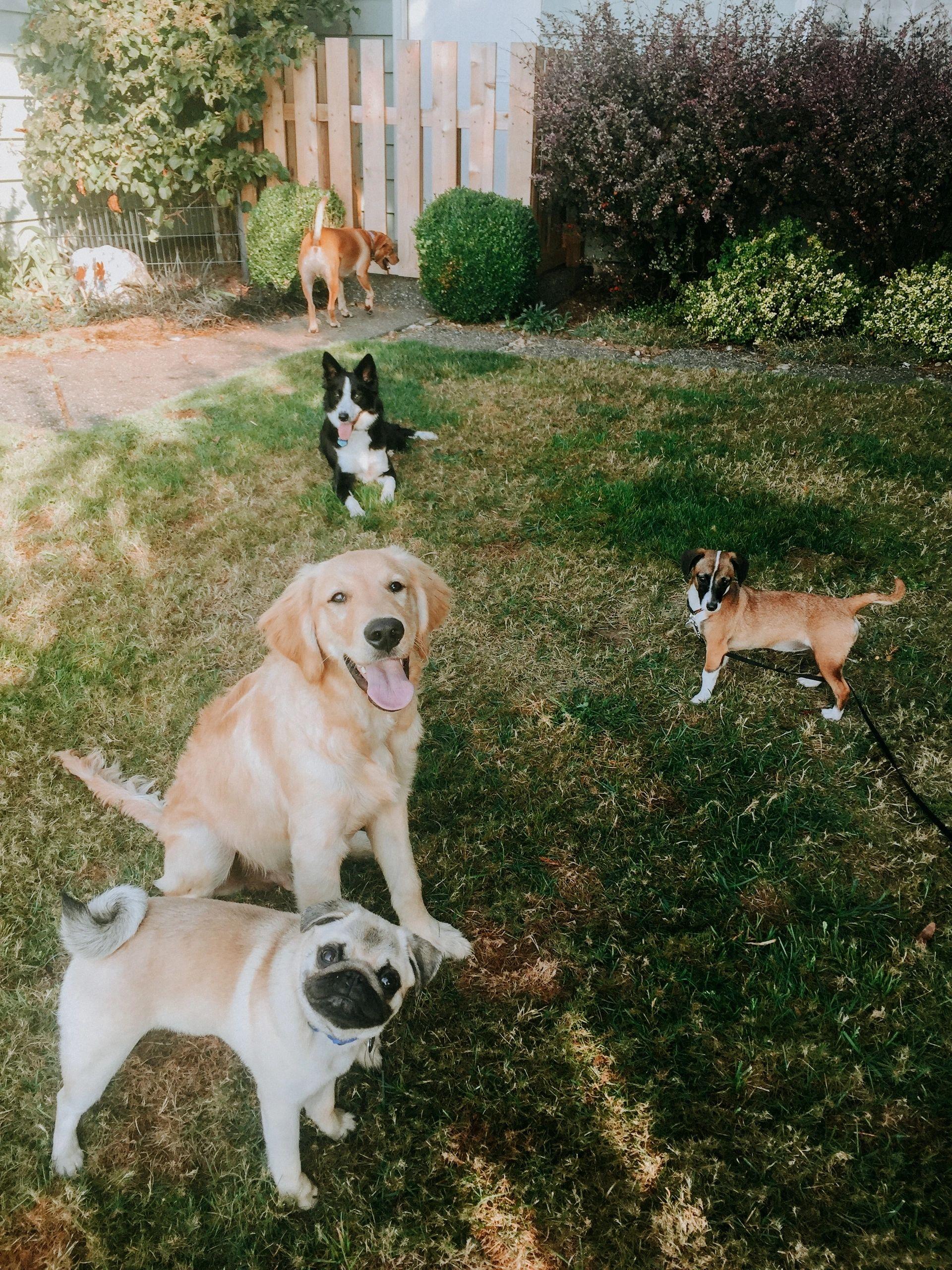 Dog Training 101 logo