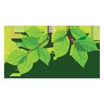 Avid Tree Care LLC logo