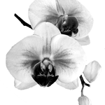 Rebecca's Flower Shoppe logo